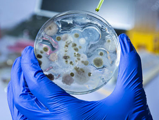 The rapid rise of synthetic biology, a futuristic field of science that seeks to master the machinery of life, has raised the risk of a new generation of bioweapons, according a major US report into the state of the art.